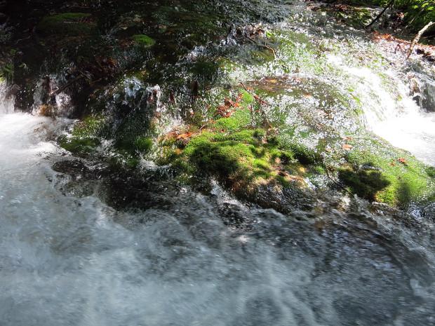 森林|鳥海山獅子ヶ鼻湿原 058