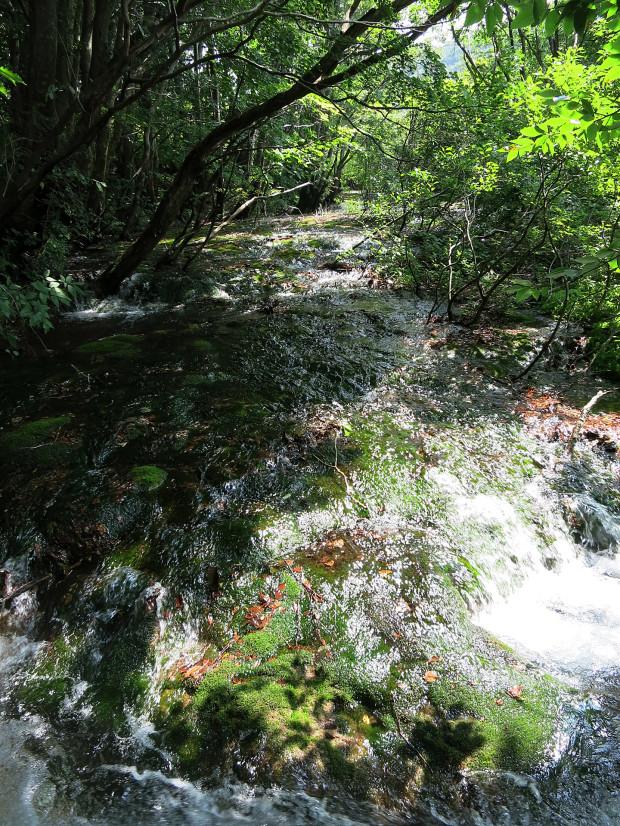 森林|鳥海山獅子ヶ鼻湿原 060