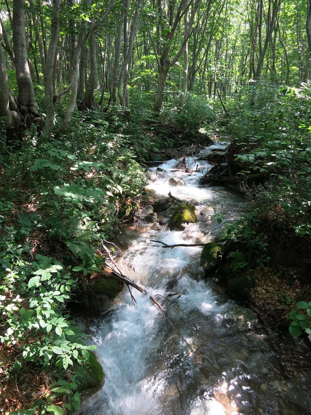 森林|鳥海山獅子ヶ鼻湿原 062