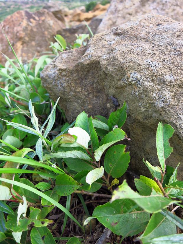 岩|石018