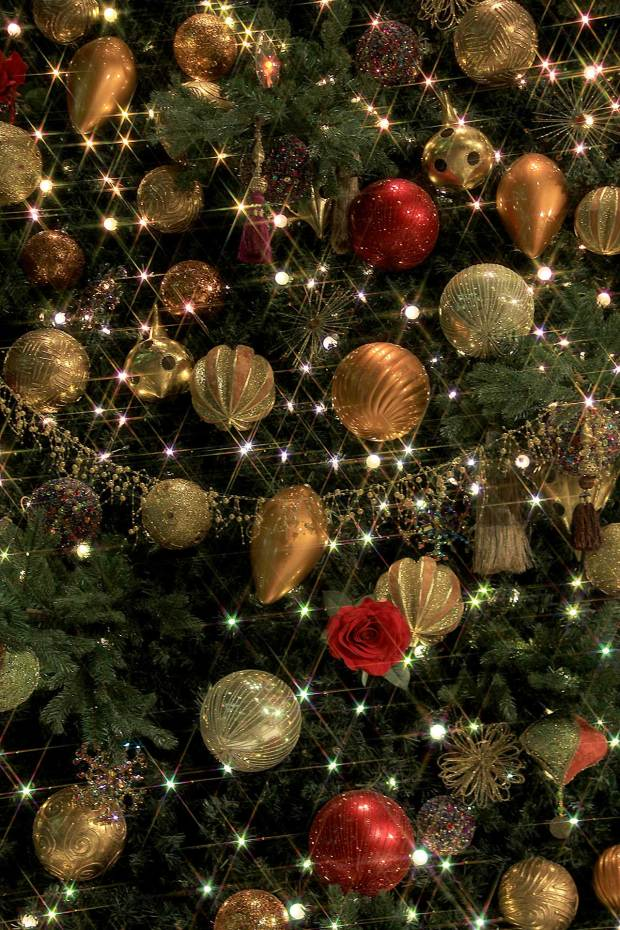 丸の内クリスマスイルミネーション|クリスマスツリー081