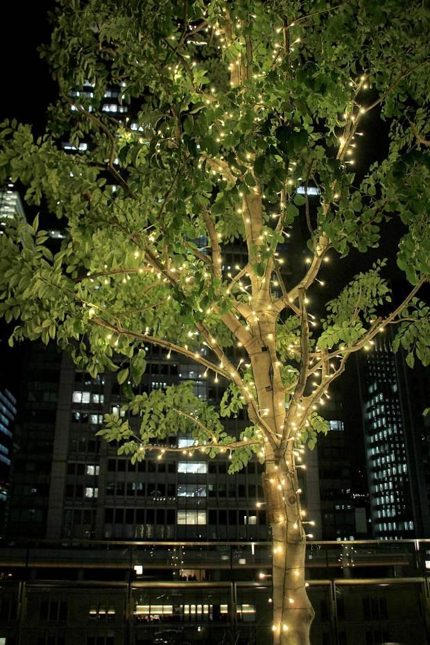 丸の内クリスマスイルミネーション|クリスマスツリー096