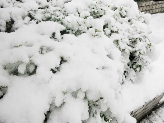 雪景色088