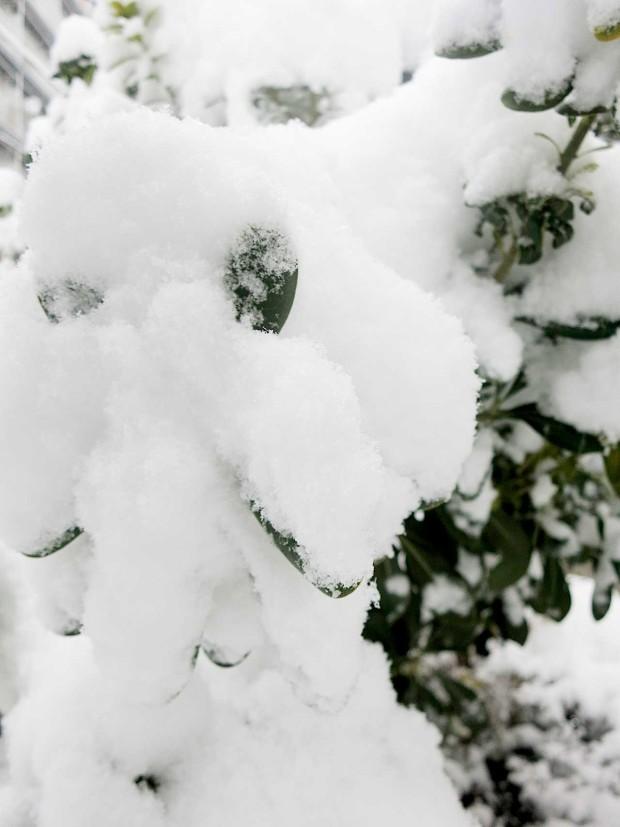 雪景色094