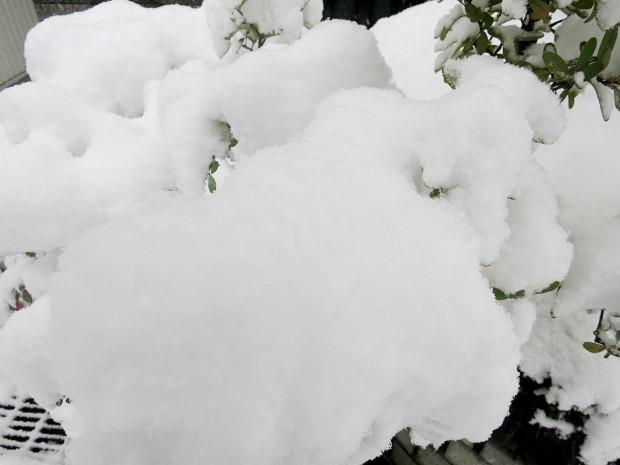 雪景色095