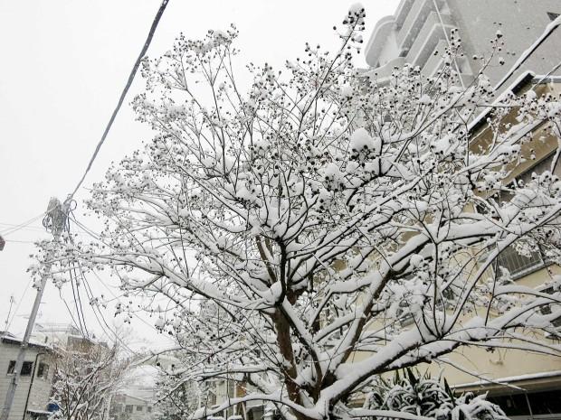 雪景色098