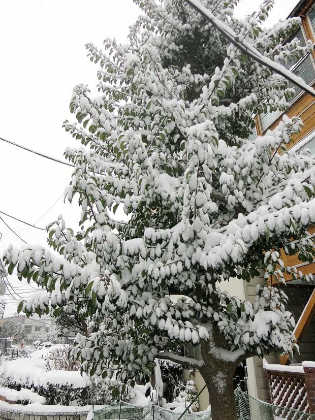 雪景色099
