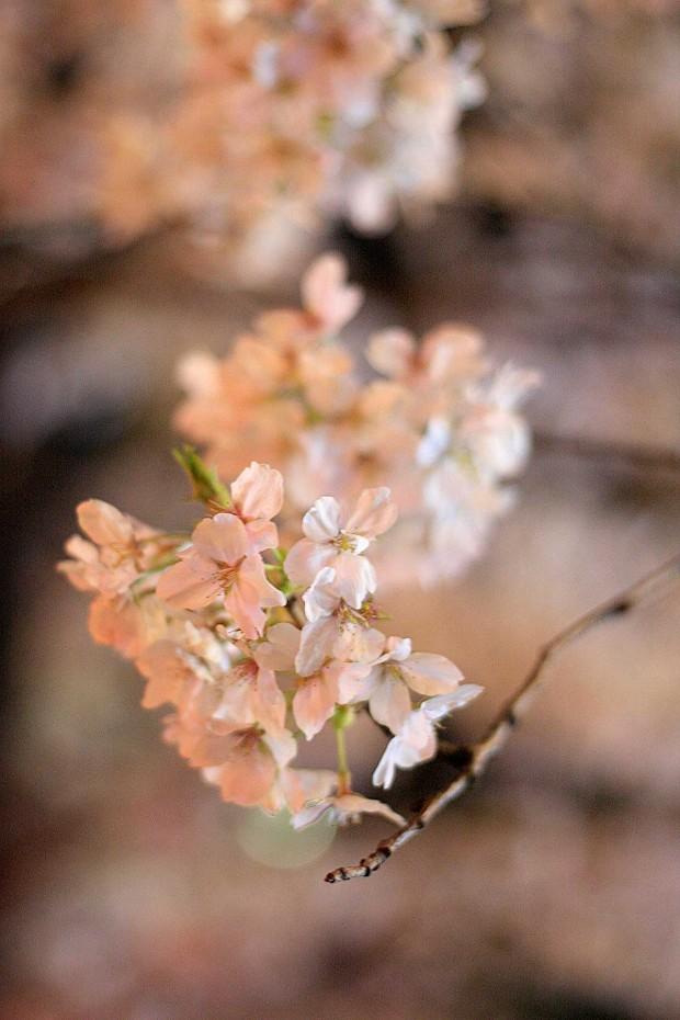 夜桜(目黒川花見)54