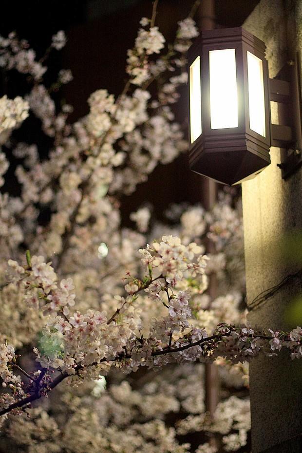 夜桜(目黒川花見)56
