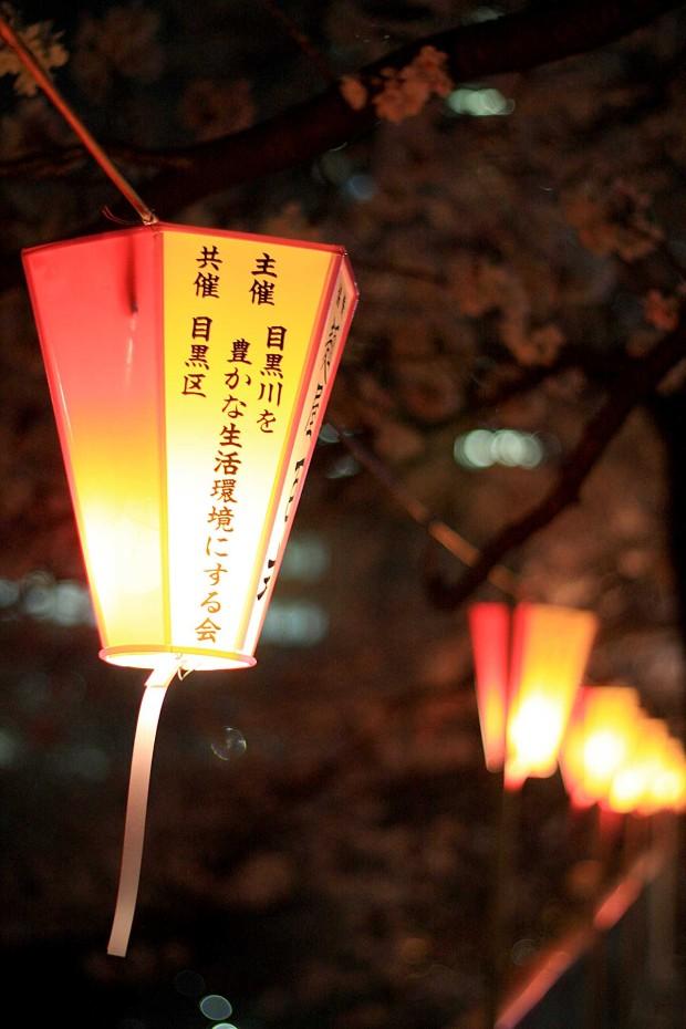 夜桜(目黒川花見)58