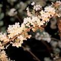 夜桜(目黒川花見)サムネイル