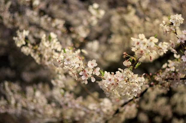 夜桜(目黒川花見)61