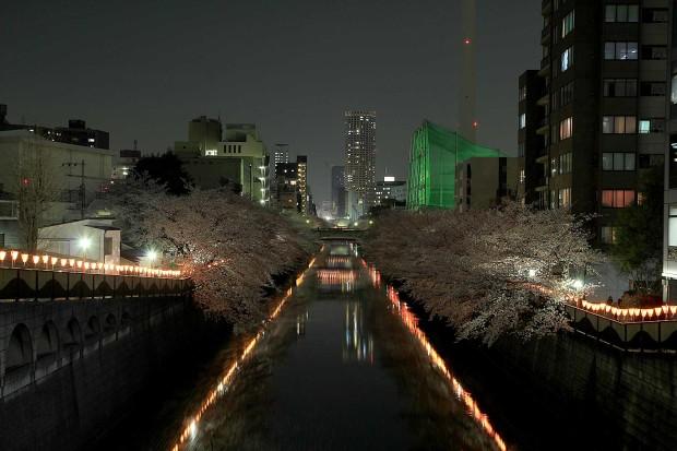 夜桜(目黒川花見)65