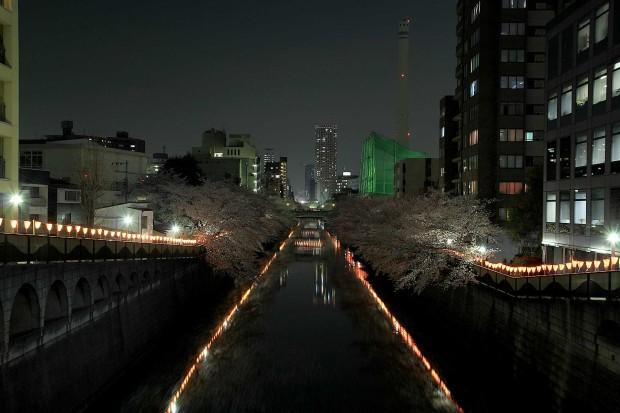 夜桜(目黒川花見) 全体の風景66