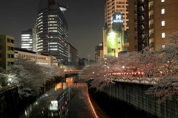 夜桜(目黒川花見) 全体の風景67