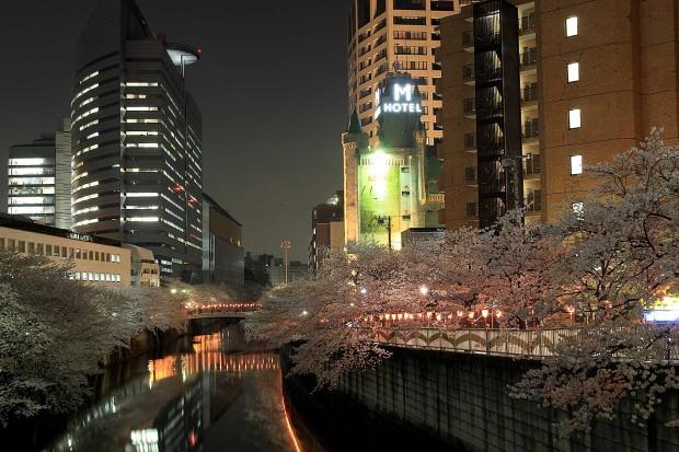 夜桜(目黒川花見)|全体の風景68