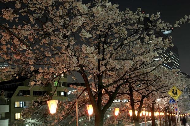 夜桜(目黒川花見)71