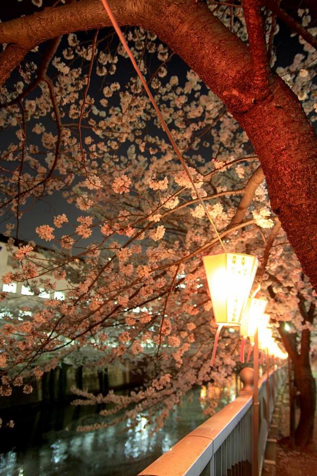 夜桜(目黒川花見)78