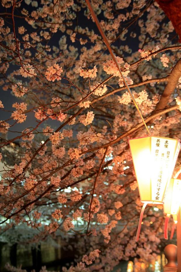 夜桜(目黒川花見)79
