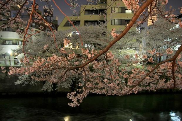 夜桜(目黒川花見)81