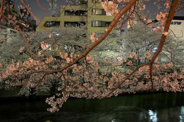 夜桜(目黒川花見)82