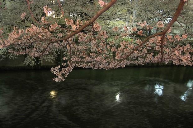 夜桜(目黒川花見)83