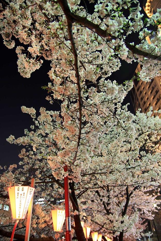 夜桜(目黒川花見)91