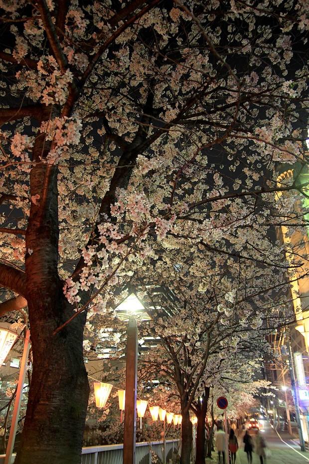 夜桜(目黒川花見)92
