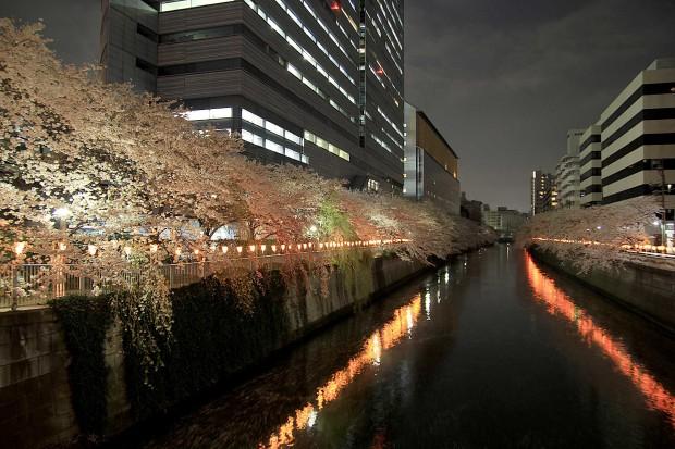 夜桜(目黒川花見)93