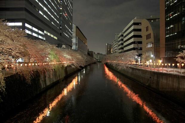 夜桜(目黒川花見)94
