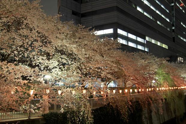 夜桜(目黒川花見)95