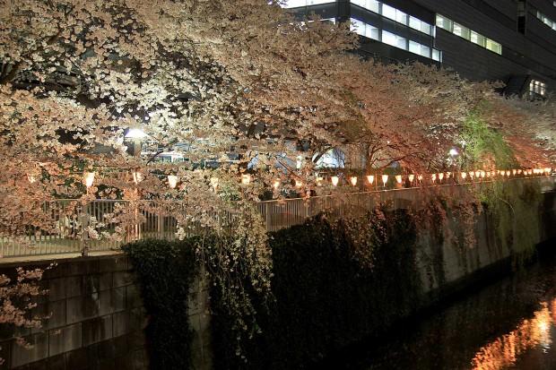 夜桜(目黒川花見)96