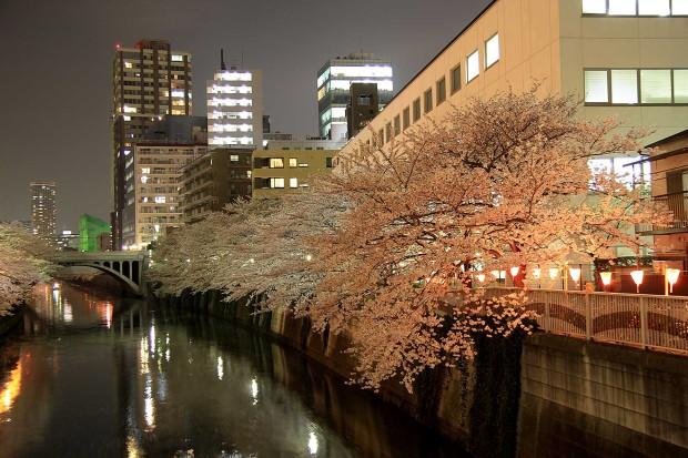 夜桜(目黒川花見)99