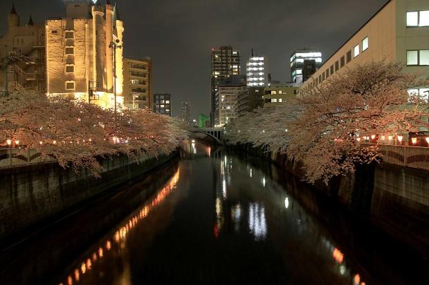 夜桜(目黒川花見)101