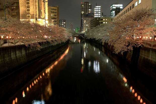 夜桜(目黒川花見)102