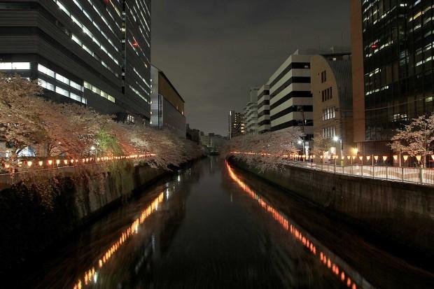 夜桜(目黒川花見)103