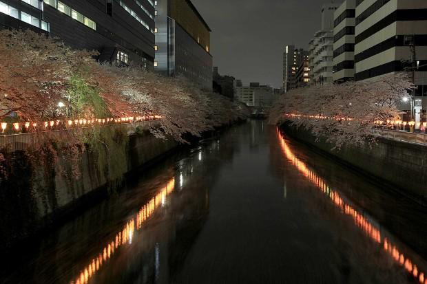 夜桜(目黒川花見)104