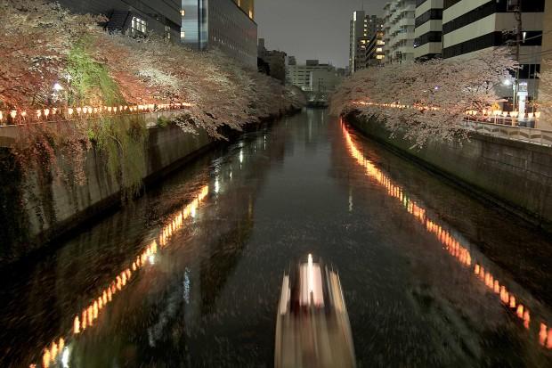 夜桜(目黒川花見)105